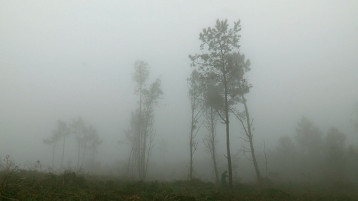 Tall trees wreathed in fog in the film Costa da Morte